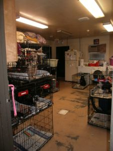 spay and neuter - dogs
