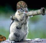 squirrel at war