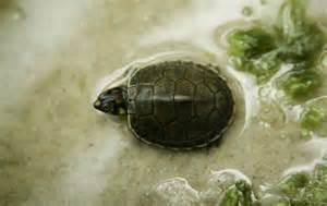 turtle, pet, responsibility