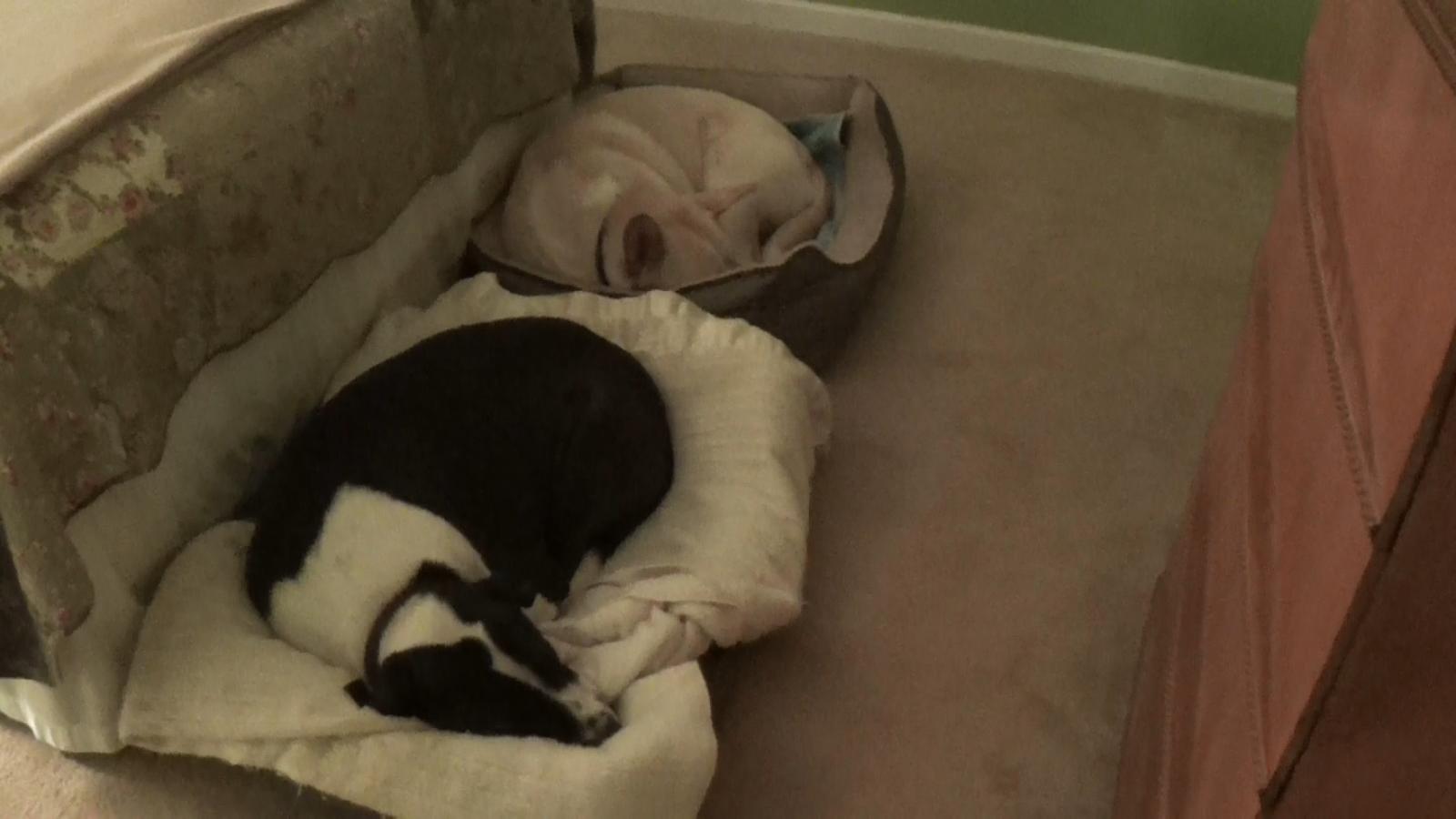Blondie, Cochise, bed