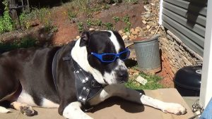 Cochise OWNS the sunshine on National Mutt Day