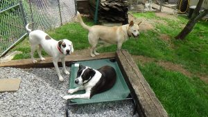 coolaroo line-up, canine foster care