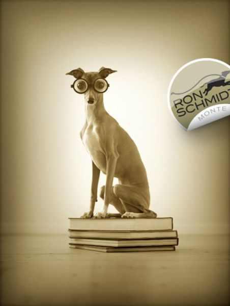 Dog_Geek Greyhound