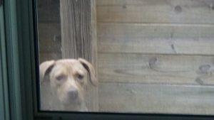 Shiloh wants in