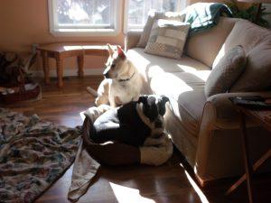 Blondie-Cochise 131129 Sun Puppies-800