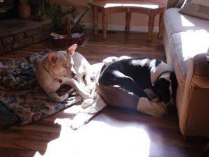 Blondie-Cochise 131129 Sun Puppies2-800
