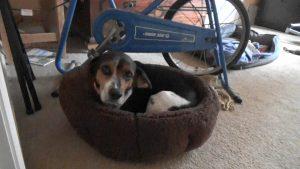 Buddy's deep dish dog bed