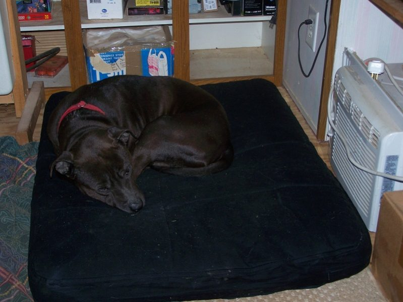 Buster tests the new dog bed