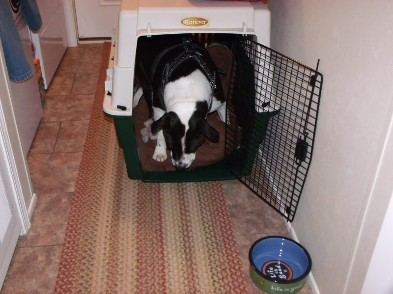 dog, crate,