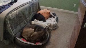 Cochise, Lancelot sleeping