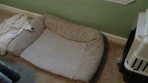 Bedtime dilemma, Cochises bed (empty)