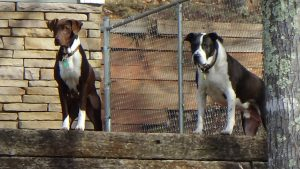 Cora watching w cochise