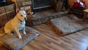 bedtime dilemma, blondie on futon