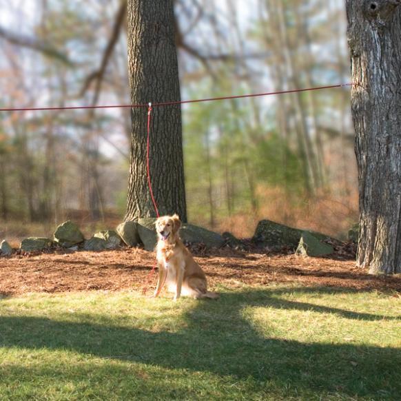Using a run wire to preven dog escapes