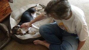 fostering, rescue, canine, dog, Josephine