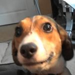 scary dog