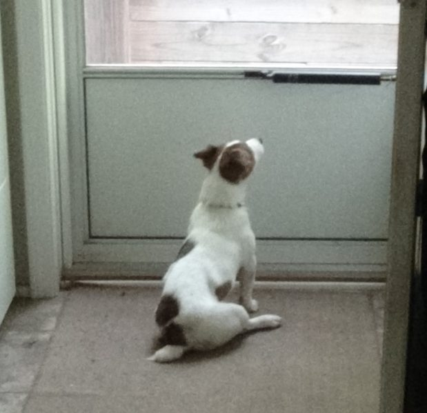 Wants out on a rainy day